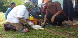Disnak Antisipasi Penyebaran Flu Burung