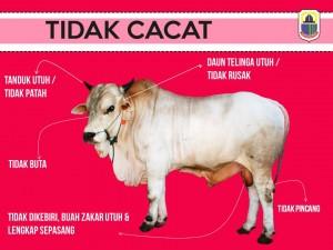 TIDAK CACAT