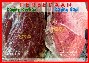 PERBEDAAN DAGING SAPI & KERBAU
